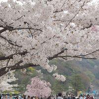 青春18きっぷの旅 2019年春 平成最後の桜を求めて [5] 〜京都、嵐山の桜、嵐電の桜のトンネル〜