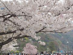 青春18きっぷの旅 2019年春 平成最後の桜を求めて [5] ~京都、嵐山の桜、嵐電の桜のトンネル~