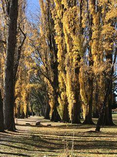 2019年夫婦旅 はじめてのニュージーランド②秋色満載 クィーンズタウン、アロータウン、ワナカ