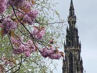 イギリス旅行その1 桜咲くエディンバラ