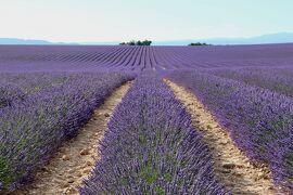 南仏の美しい村とラヴェンダー畑を巡る旅(10)《ヴァランソル》ラヴェンダーの香りとミツバチの羽音に誘われて☆Valensole