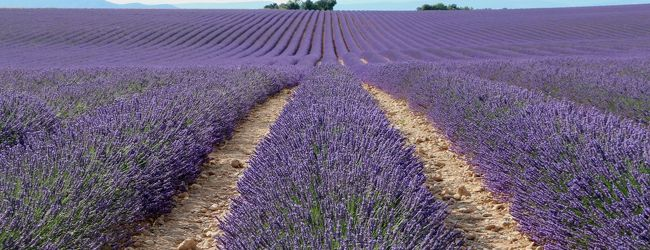 南仏の美しい村とラヴェンダー畑を巡る旅...
