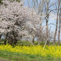 【角館&男鹿】桜前線を追いかけて� 0日〜2日目