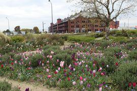 春の横浜♪ Vol.2:新港中央広場のお花畑♪