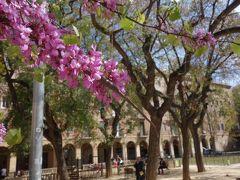 バルセロナを歩く (4.7) ゴシック地区のお散歩。どこを歩いても面白い。やめられない。