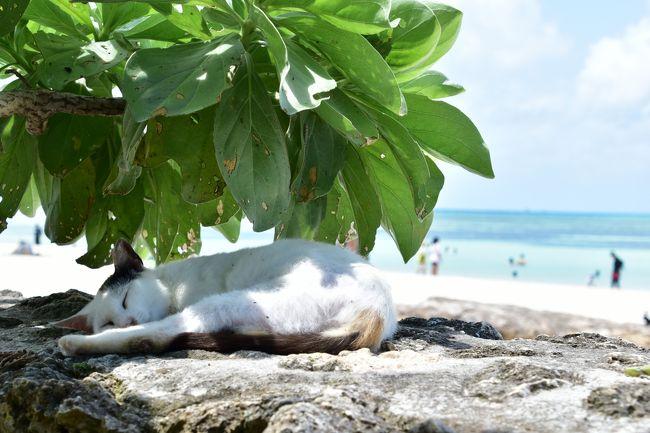 今年のゴールデンウィークは有難いことに10連休。そこで思い切って沖縄に一人旅をすることに決定!見ながら心の赴くままにいろんな場所をふらついてきました。<br />ツアーに入らない完全一人旅はこれが初で、勇気を出して一人居酒屋にもチャレンジ(笑)<br />航空券・宿泊費はふだんの倍近くかかったけれど、天候にも恵まれ素晴らしい景色に心洗われた最高の5日間でした。