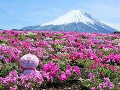 「令和」の始まりは富士山&伊勢志摩へ(その1)《富士芝桜まつり編》