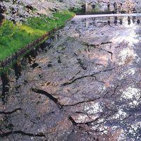 青森 桜めぐり〜岩木川河川公園、弘前公園、世界一の桜並木、鶴の舞橋、芦野公園駅