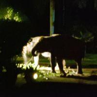 はじめまして、バリ島�暗闇に浮かび上がる象さんにドッキリ!