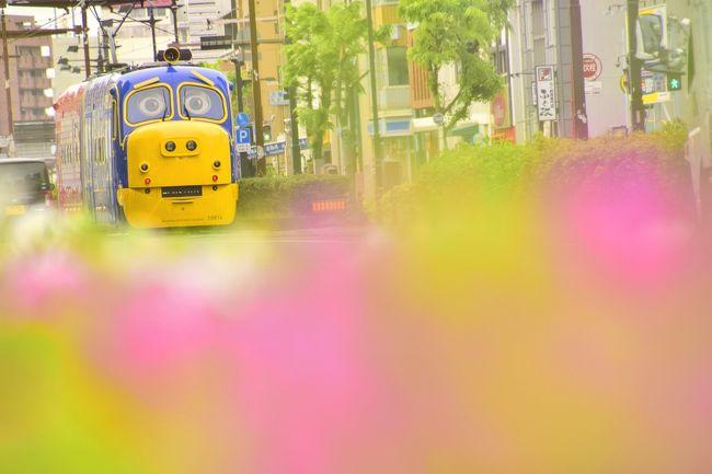 岡山電気軌道(おかでん路面電車)では、英国発の人気鉄道アニメ「チャギントン」とコラボレーションして、2019年3月から「おかでんチャギントン」が営業運転を開始しています。<br /><br />岡山市街を走るウィルソンとブルースター!「おかでんチャギントン」を追いかけて、岡山に訪れてみました。