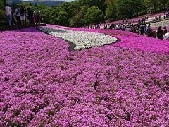 GW芝桜ピンクを満喫 電車日帰り旅