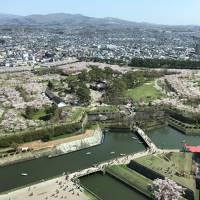 黄金週 桜満開 五稜郭! 函館山は 人の海