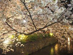 青春18きっぷの旅 2019年春 平成最後の桜を求めて [6] ~京都、祇園白川ライトアップ~