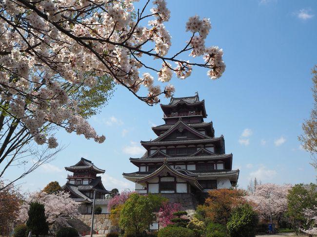 最近京都などの桜を見るのが定番になってる私の春の青春18きっぷ旅で、今年は姫路城の桜も見てみたいな!と思い急きょ計画を立て、青春18きっぷの旅をするために急いでホテルを予約し、4月4日から5泊6日で今回の主な目的地、姫路と京都へ桜を見に出かけてきました。<br /><br />4月8日は伏見地区へ行きます、伏見といっても人気の伏見稲荷などではなく、桜の時期に見に行きたいと思ってた伏見桃山城や宇治川派流を見に行きます。坂本龍馬で有名な寺田屋旅館も見てきました。<br /><br />京都では比較的観光客が少なめで桜の季節でもゆっくり楽しめる場所のレポ、よければ御覧なって下さいな^^<br />