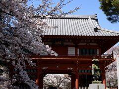 日本さくら名所100選 野田市清水公園へお花見 そして「こうのとりの里」!