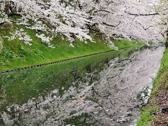 GW2019 東北10日間 温泉巡りの旅 その2 弘前公園の桜