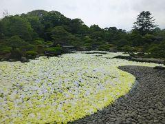 2019年G.W最終日・令和初めての旅行は大根島由志園の牡丹園遊会で黄金の池泉牡丹