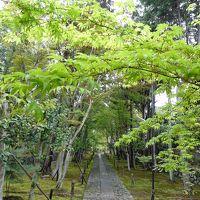 いつ行っても楽しい京都・奉祝令和元日�  広隆寺・鹿王院・嵐山・御金神社