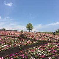 令和初旅 はじめての「おんせん県」Vol.2 炭酸泉でシュワシュワ~&絶景を楽しむ