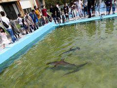 徳島高知ドライブ旅行8-さめが泳ぐ25mプール むろと廃校水族館,室戸世界ジオパークセンター