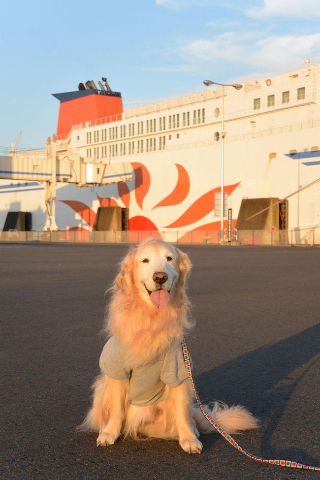 今まで愛犬と一緒に車で北海道へ行って見たいな~と思っていたのですが、フェリーで移動となると、わんこはフェリー内でケージの中ということで、それは絶対無理とあきらめていました。じゃあ車で青森までひたすら走って、津軽海峡フェリーに乗って海を渡り、函館からまたひたすら自走・・というルートもありますが、かなり距離もありとてもハードなのであきらめていました。<br />しかし、大洗⇔苫小牧航路の商船三井フェリー新造船に伴って、何と!大型犬も一緒に同じ部屋にいられるウィズペットルームができたとのことで、愛犬のゴールデンレトリバーと一緒に北海道の富良野・美瑛を満喫してきました。<br />せっかく北海道に行くので、8泊9日の長期で行くことにしました。<br /><br />1日目:自宅から車で大洗港へ。大洗19:45発の苫小牧行きのさんふらわあ ふらので移動します。(フェリー内宿泊)<br />2日目:苫小牧西港から富良野へ(B.J.Club 富良野宿泊〔大型犬OK〕)<br />3日目:美瑛 ぜるぶの丘、ケンメリの木、美瑛神社です。(B.J.Club 富良野宿泊〔大型犬OK〕)<br />4日目:ファーム富田、中富良野、とみたメロンハウスへ。(B.J.Club 富良野宿泊〔大型犬OK〕)<br />5日目:富良野チーズ工房、ふらのワインハウス、六花亭、富良野駅へ。(B.J.Club 富良野宿泊〔大型犬OK〕)<br />6日目:またファーム富田、四季彩の丘、木巡りです。(B.J.Club 富良野宿泊〔大型犬OK〕)<br />7日目:青い池、白ひげの滝、望岳台へ。(B.J.Club 富良野宿泊〔大型犬OK〕)<br />8日目:富良野から、苫小牧西港へ。18:45発の大洗行きのさんふらわあふらので帰ります(フェリー内宿泊)<br />9日目:最終日は、大洗港に到着後、高速道路で自宅へ帰りました。<br /><br /><br />まずは初日、大洗港まで自分の車での移動です。19:45発のさんふらわあ ふらの 出航に合わせて車で向かいます。もちろんわんこも一緒なので、余裕をもって家を出ました。8泊9日と長期ですが、自分の車なので、荷物が多少多くても楽勝です。そこがフェリーの良いところですね!