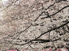 都内桜名所-1 松戸発/お花見めぐり日帰りバスツアー ☆外環道市川線を初利用で