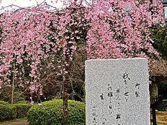 都内桜名所-6 千鳥ケ淵戦没者墓苑 ☆御製の碑・しだれ桜とともに