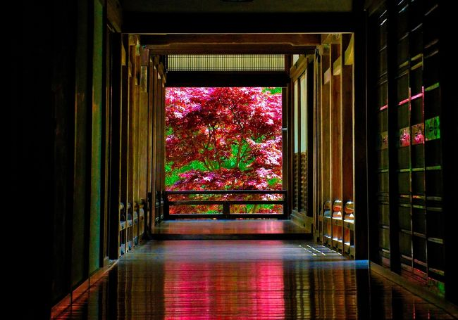 後編は本堂を中心に本坊のインスタ映えポイント、歓喜院の奥に潜む茶室「茄藻庵」など長谷寺の要所や隠れた見所をレポいたします。<br />古代遺跡が一直線上に築造・配置されていることを「レイライン」と言い、日本にも幾つか存在します。世界中で見られるこの現象は、1912年に英国の考古学研究家 アルフレッド・ワトキンスによって発見されました。<br />中でも、太陽信仰との結び付きから天照大神に関係する「太陽の道」と呼ばれるレイラインが遺跡ファンを魅了してきました。東端に当たる三重県の神島から、西端の淡路島にある伊勢久留麻神社を結ぶ北緯34度32分線を指し、伊勢(斎宮)や三輪山 大神神社、元伊勢と呼ばれる桧原神社、国津神社、卑弥呼の墓説もある箸墓古墳など主なもので14以上の古い神社や遺跡が連なります。長谷寺もそのライン上に鎮まり、特別なエネルギーが集まる最強パワースポトのひとつとされています。<br />長谷寺のHPです。<br />http://www.hasedera.or.jp/