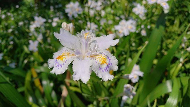 5月のゴールデンウィークも終わり暑くなったので、一か月ぶりに高尾山へ行ってきました。4月とは違いまた奇麗な花を見ることができました。今回は、1号路から4号路で山頂へいってきました。富士山は、写真では見えないですね、肉眼ではうっすら見えました。