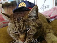 令和最初のプチ旅行。にゃー駅長に逢いにいきまーす@平成から令和の史上最大のGWの旅<3>