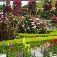 結婚記念日旅行は花に包まれた五月−−−。