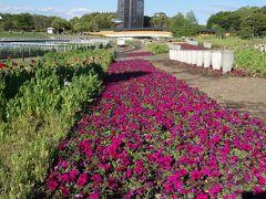 浜名湖ガーデン・パークはたくさんの花々が艶を競っていました。いい季節です。