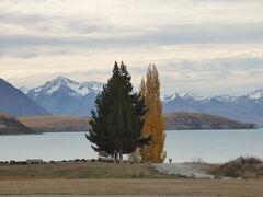 2019年GW 上海経由ニュージーランドの旅 テカポ湖