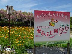 せらふじ園に行ってミタ。 広島県 世羅町