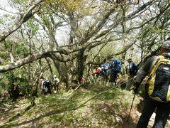 豊かな原生林を今に残す天城山を歩く