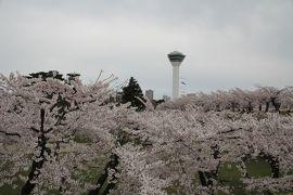 201904-05GW-04_函館五稜郭の桜と鹿部町 Sakura in Goryokaku (Hokkaido)