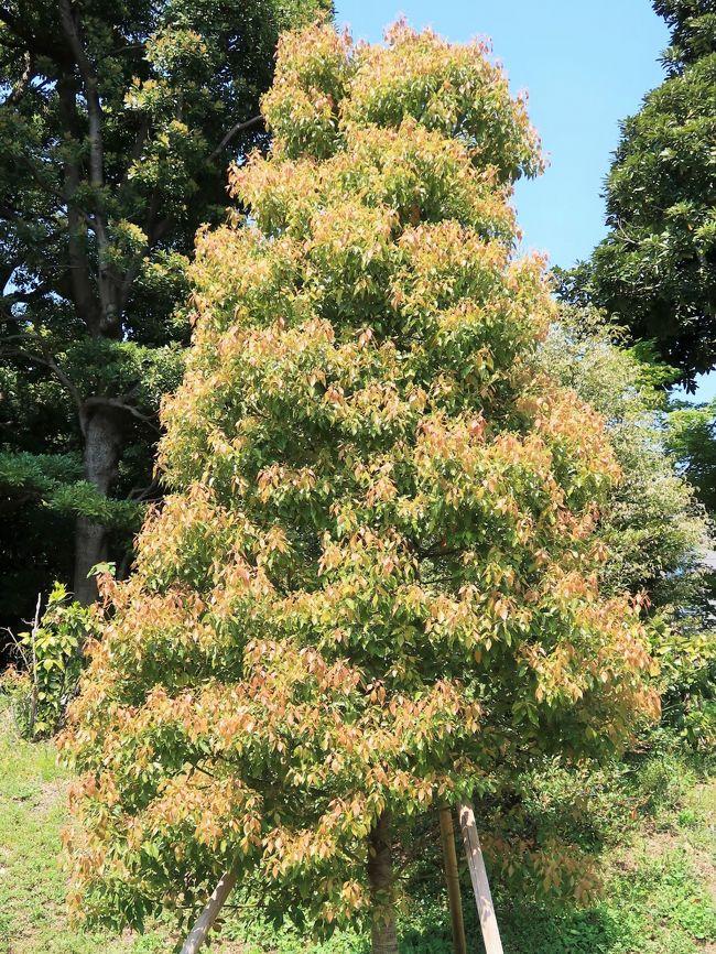 昭和43年(1968)の皇居東御苑公開に際し、都道府県から寄贈された各「都道府県の木」が植えられている。<br />都道府県のシンボルの一覧は、日本の各都道府県の花・木・鳥等の一覧である。 条例等で制定されているもの、慣例として用いられているものがある。 <br />都道府県の木については、1970年開催の日本万国博覧会に向けた記念事業として、毎日新聞社が提唱した「緑のニッポン全国運動」の一環として、1966年に定められたものが多い。<br />(フリー百科事典『ウィキペディア(Wikipedia)』より引用)<br /><br />都道府県の木・花・鳥 一覧については・・<br />https://www.ueki.or.jp/?blogid=23&amp;catid=112<br />http://www.rinya.maff.go.jp/kids/study/faq/bird.html<br /><br />皇居東御苑は、皇居造営の一環として,昭和35年1月29日の閣議決定に基づき,皇居東地区の旧江戸城の本丸・二の丸・三の丸の一部を皇居附属庭園として整備することになり,昭和36年に着工し,昭和43年9月に完成しました。面積約21万平方メートルの庭園は,昭和43年10月1日から宮中行事に支障のない限り一般に公開されています。<br />http://www.kunaicho.go.jp/about/shisetsu/kokyo/kokyo.html より引用<br />