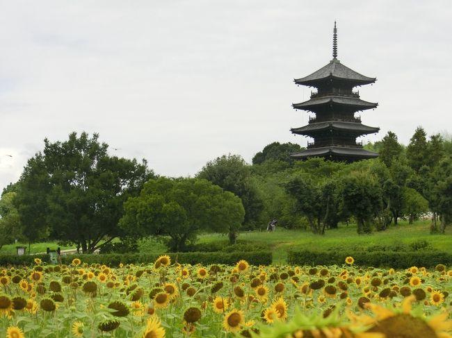 猛暑の岡山旅行 ④ ひまわり畑と五重塔☆吉備路の田園地帯をサイクリング