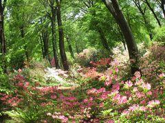 木漏れ日に咲く花