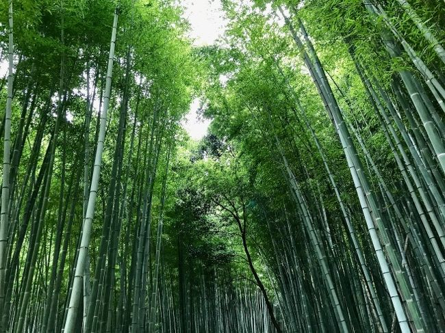 余呉から北陸本線と山陽本線を乗り継いで京都へやって来ました。<br />買い物を済ませると帰りの新幹線まで少し余裕があります。<br />京都駅周辺はメチャ混み(空いているコインロッカーを探すのにすごい苦労したし!)なので<br />嵐山方面をめざしてみることにしました。<br />天龍寺から竹林、常寂光時を散策して、嵐電と地下鉄で京都駅に戻ります。