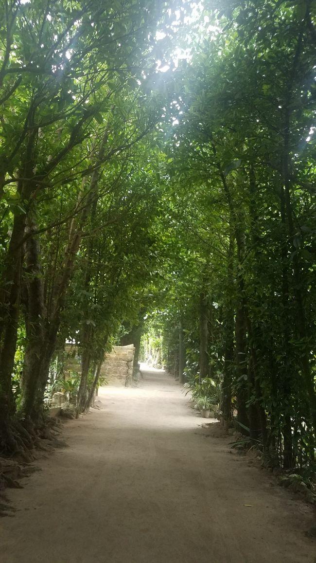 沖縄にはたくさんのパワースポットがあります。<br />そのひとつ<br />備瀬のフクギ並木の紹介です