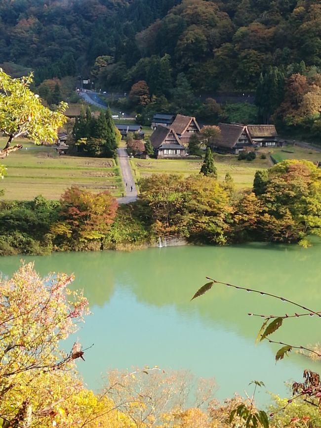 あれからもう、半年以上が経ってしまいましたが記録のために旅行記を書いておきたいと思います。昨年の秋、富山の五箇山で合掌造りに泊まる機会がありました。その記録です。<br /><br />福井から高速で富山回りの方が、近いそうなのですが、今回はせっかくの紅葉時ということで白山白川郷ホワイトロードを通って五箇山に向かいました。<br /><br />富山県ナチュラリスト大会、北陸三県合同研修会に参加させていただきました。<br />今日のお宿は、五箇山合掌の里<br />合掌造りの宿泊施設と、合掌造りの外観をしたトイレと洗面所で、たくさんの人がここで泊まれるようになっています。<br />シュラフ持ち込みでの宿泊です。布団はたくさんありましたが、カメムシがあちこちにいて、とてもそのお布団だけではお泊りできそうになかったのです。シュラフかシーツを持参することとなっていたのには、疑問符だったんですが、ここでやっと理解できました。画像無しですが、割りばしで、カメムシをつかみ、ペットボトルを切って上を逆さにしたカメムシ取りに入れる。これが重宝していました。<br /><br />五箇山の合掌造りの構造や茅葺の吹き替えの様子などの公演を聞き<br />五箇山菅沼集落を巡り<br />川沿いの道の散策をし<br />2日間を有意義に過ごすことができました。<br /><br />関係各位に深く感謝します。<br /><br /><br /><br /><br /><br /><br /><br /><br />