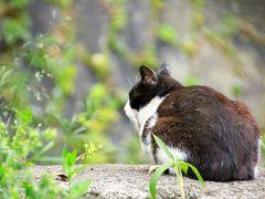 猫とウサギと桜三昧 春の尾道&大久野島の旅 (3)尾道で出会ったネコたち