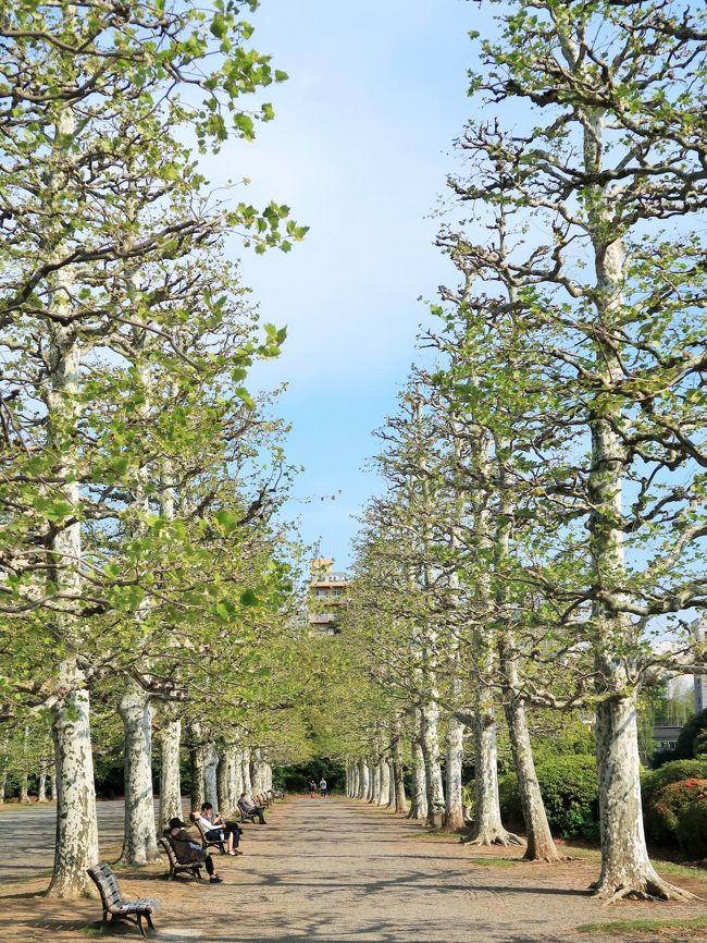 新宿御苑(しんじゅくぎょえん)は、東京都新宿区と渋谷区に跨る環境省所管の庭園である。 <br />もともとは江戸時代に信濃高遠藩内藤家の下屋敷のあった敷地である。 1879年(明治12年)に新宿植物御苑が開設され、宮内省(現在の宮内庁)の管理するところとなったが、第二次世界大戦後は一般に公開され、現在は環境省管轄の国民公園として親しまれている。<br />1906年5月 - 新宿御苑が開園する。<br />1949年5月 - 国民公園となり一般に利用が開放される。<br />2012年11月 - 大温室がリニューアルオープン。<br /><br />御苑内は約58ヘクタールのスペースに「日本庭園」、「イギリス風景式庭園」、「フランス式整形庭園」を組み合わせており、樹木の数は1万本を超える。日本さくら名所100選に選定されており、65種・約1300本の桜があり、春には花見の名所として大勢の観光客で賑わう。ソメイヨシノが見ごろを迎える3月下旬から4月上旬にかけても多くの来園者を迎えるが、一般財団法人国民公園協会ではイチヨウを御苑の桜の代表品種として位置付けており、イチヨウ等の多品種のヤエザクラが見ごろを迎える4月中旬から下旬を御苑の桜のベストシーズンと位置付けている。 <br />(フリー百科事典『ウィキペディア(Wikipedia)』より引用)<br /><br />新宿御苑 については・・<br />http://fng.or.jp/shinjuku/<br />https://www.env.go.jp/garden/shinjukugyoen/<br />https://tabichannel.com/article/265/shinjyukugyoen