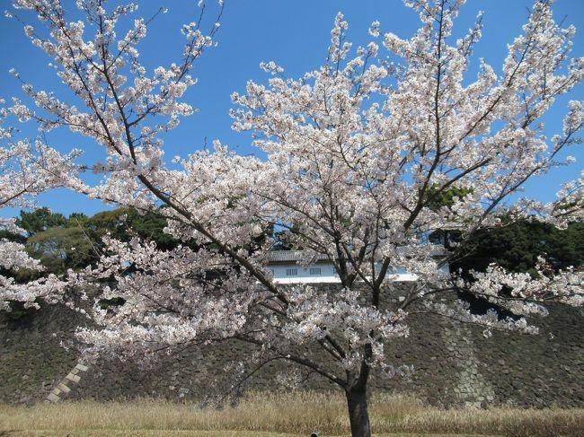 2019年4月<br />皇居の乾通り一般公開に、行ってきました。<br />以前、2014年4月と同年12月に行きましたので、<br />今回が3回目です。<br />すごい行列を覚悟していましたが、行った時間が良かったのか、<br />荷物検査に並ぶこともなく、すいすいと中へ~<br />青空のもと、キレイな桜を見てきました。<br />そのまま、千鳥ヶ淵もお散歩してきました。