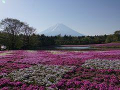 山梨県 富士芝桜まつり2019