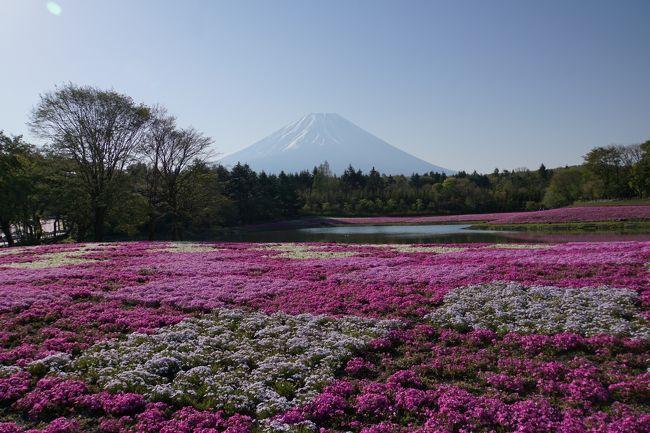 意外にもまだ旅行記の日本地図で埋まってなかった山梨県。<br />何回も行ってるのに旅行記はあげた事がなかったようで、<br />地図を埋めるのも兼ねて富士芝桜まつりに行ってきました~!<br /><br />ほうとうや有名パン屋さん、帰りには静岡県富士山世界遺産センターにも立ち寄りました~。