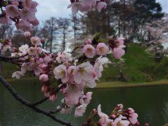 高田公園にてお花見