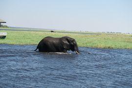 2019年GW アフリカ南部の旅#3~2日目 チョベ国立公園サファリ~