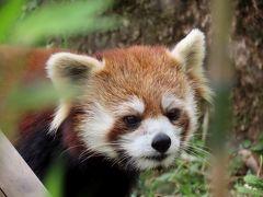埼玉県こども動物自然公園&群馬サファリパーク そろそろお年頃、嫁ぎ先が気になるミヤビちゃんに会いにSCZと、群サファをハシゴしました